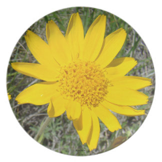 """F0034 Yellow Wildflower """"Helenium Autumnale"""" Party Plates"""