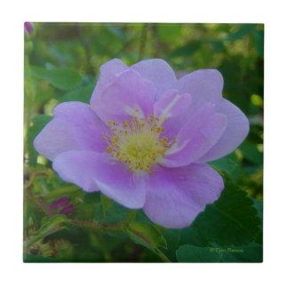 F0036 Wild Rose Tile