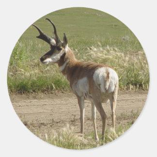 F0039 Pronghorn Antelope Buck Classic Round Sticker