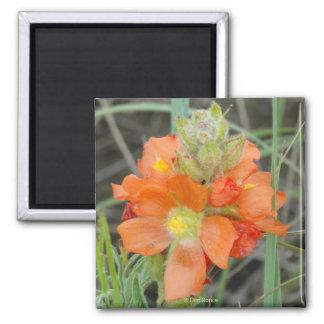 F0040 Orange Wildflowers Scarlet Mallow Magnet