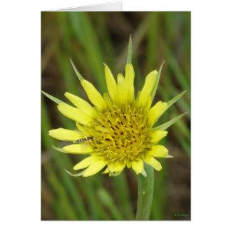 F0041 Yellow Wildflower Goats-beard Greeting Card