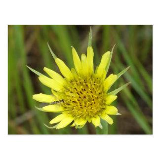 F0041 Yellow Wildflower Goats-beard Postcard