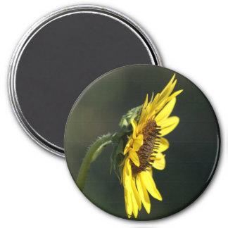 F0043 Susan Negro-observada Wildflower amarillo Imán Redondo 7 Cm