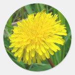"F0045 Dandelion ""Taraxacum Officinale"" Classic Round Sticker"