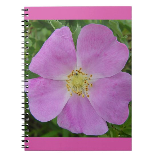 "F11 Wild Rose ""Rosa arkansana"" Notebook"