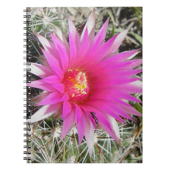 "F12 Ball Cactus Flower ""Escobaria vivipara"" Notebook"