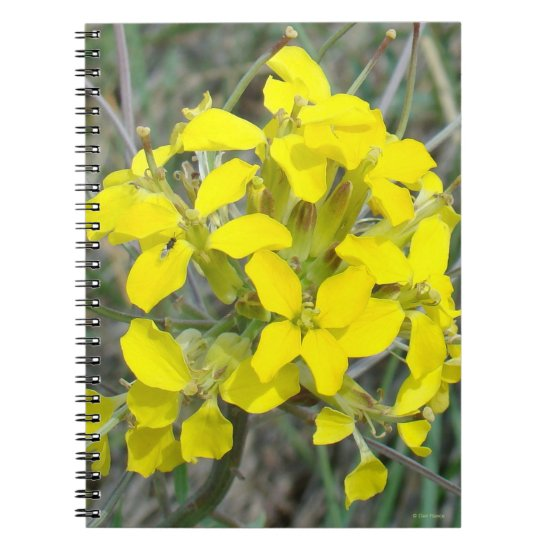 F14 Yellow Wildflowers Notebook
