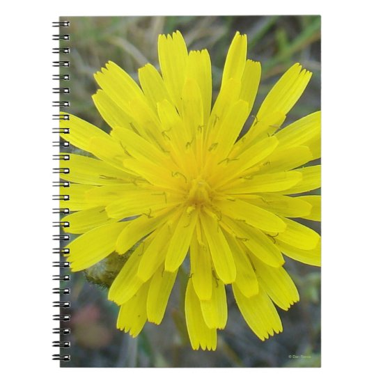 F16 Yellow Wildflower King devil Notebook