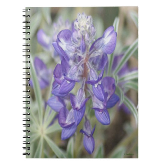 F18 Purple Wildflowers Annual Lupine Notebook