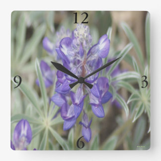 F18 Purple Wildflowers Annual Lupine Square Wall Clock