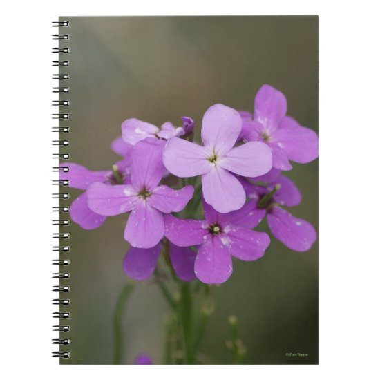 F19 Purple Wildflowers Dames Rocket Notebook