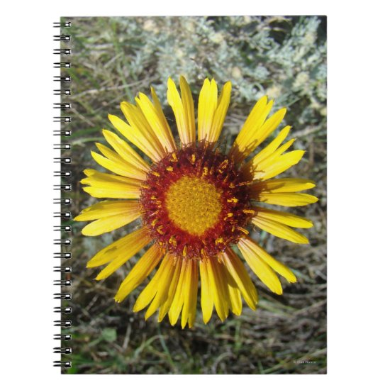 F1 Yellow Wildflower Gaillardia Notebook