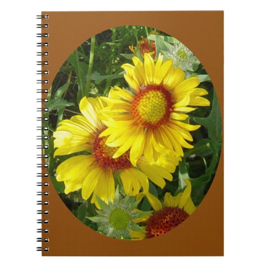 F27 Yellow Wildflowers Gaillardia Notebook