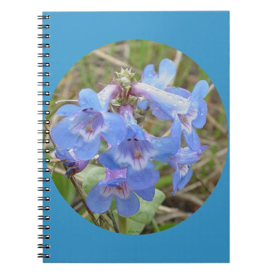 F28 Blue Wildflowers Slender Blue Bearedtongue Notebook