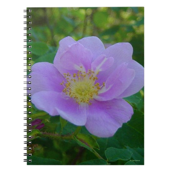 F37 Wild Rose Notebook