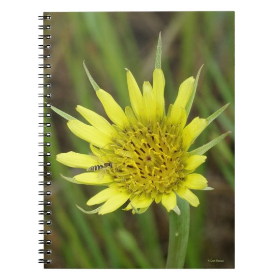 F41 Yellow Wildflower Goats Beard Notebook