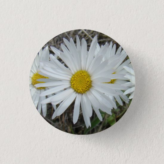 F42 White Wildflowers Smooth Aster Button