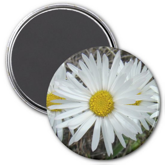 F42 White Wildflowers Smooth Aster Magnet