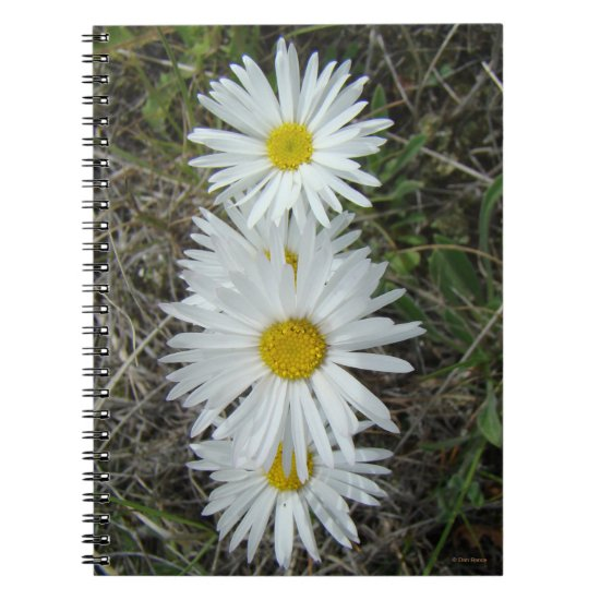 F42 White Wildflowers Smooth Aster Notebook