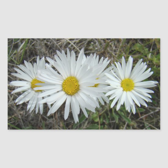 F42 White Wildflowers Smooth Aster Rectangular Sticker