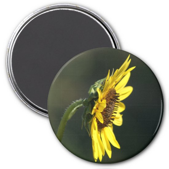 F43 Yellow Wildflower Black-eyed Susan Magnet