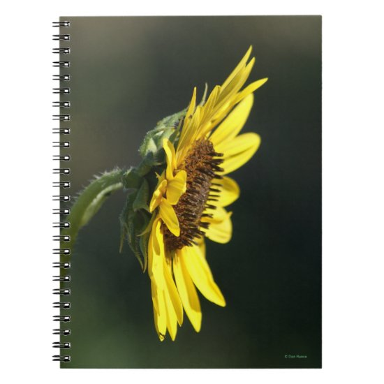 F43 Yellow Wildflower Black-eyed Susan Notebook