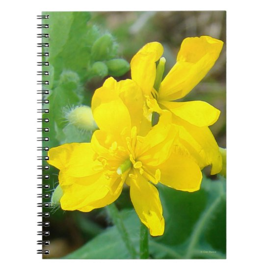 F44 Yellow Wildflower Wild Mustard Notebook