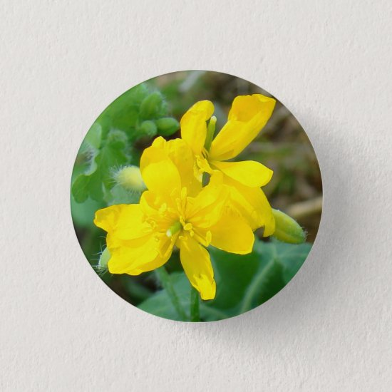 F44 Yellow Wildflowers Wild Mustard Button