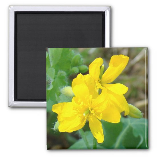 F44 Yellow Wildflowers Wild Mustard Magnet