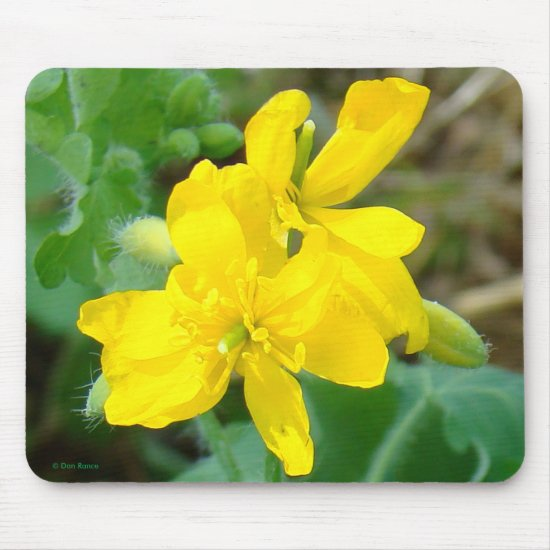 F44 Yellow Wildflowers Wild Mustard Mouse Pad