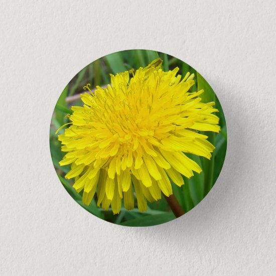 "F45 Dandelion ""Taraxacum officinale"" Button"