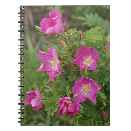 F46 Wild Roses Notebook