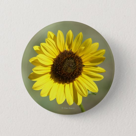 F47 Yellow Wildflower Common Annual Sunflower Button