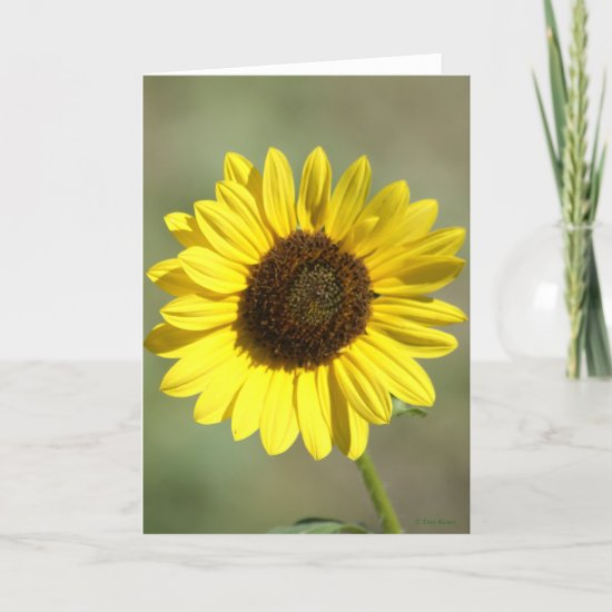 F47 Yellow Wildflower Common Annual Sunflower Holiday Card