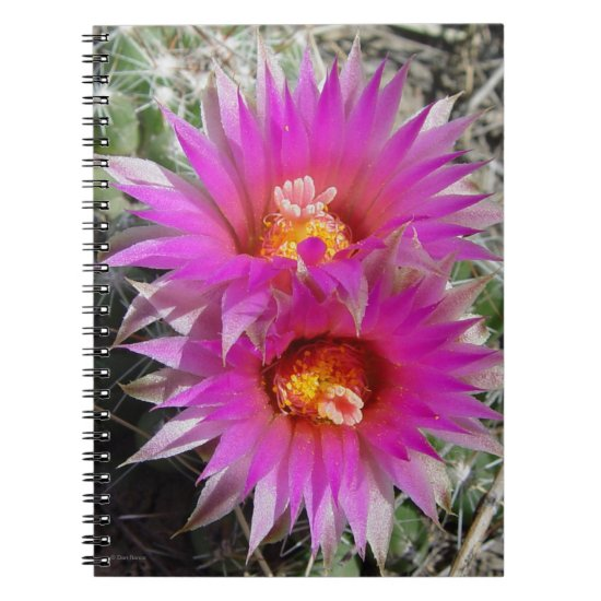 "F5 Ball Cactus Flowers ""Escobaria vivipara"" Notebook"