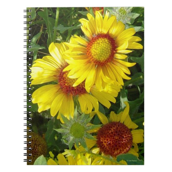 F6 Yellow Wildflowers Gaillardia Notebook