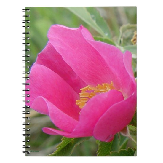 F7 Wild Rose Bright Pink Blossum Notebook