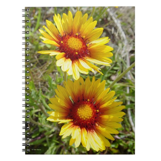 F8 Yellow Wildflowers Gaillardia Notebook