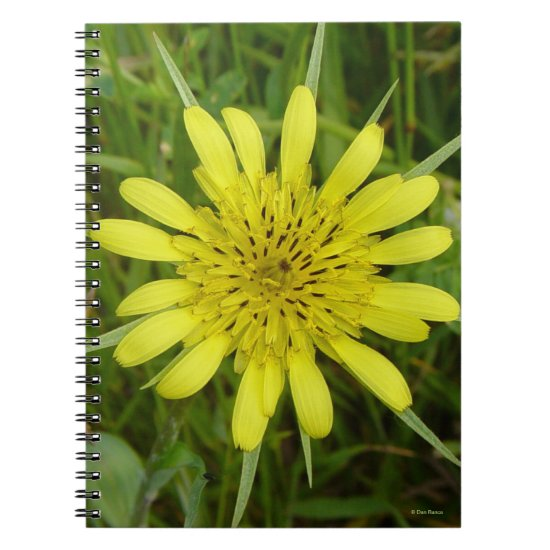 F9 Yellow Wildflower Goats-beard Tragopogon dubius Notebook
