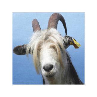 Fabric goat canvas print