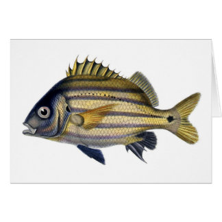 Fabulous Realistic Fish Painting Greeting Cards