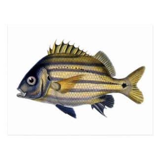 Fabulous Realistic Fish Painting Postcards