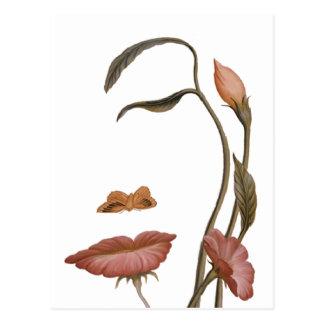 Face Flower Illusion Postcard