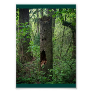 Face in a Tree Poster