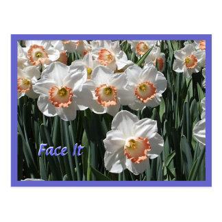 Face It - Daffodils Postcard