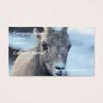 Face of a Bighorn Sheep Business Card