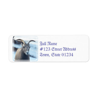 Face of a Bighorn Sheep Label