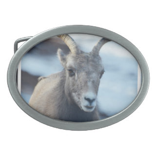 Face of a Bighorn Sheep Oval Belt Buckle