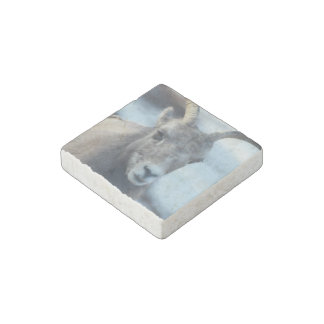 Face of a Bighorn Sheep Stone Magnet