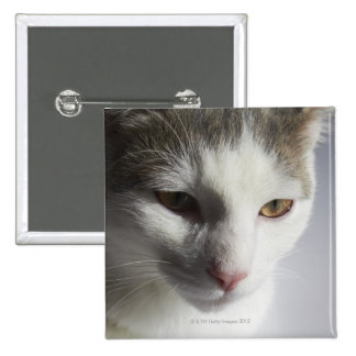 Face of a cat pinback button